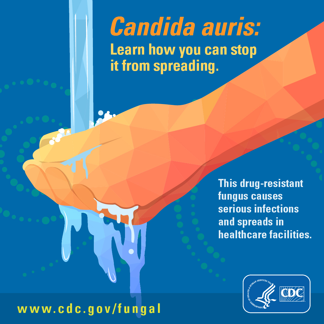 Candida auris : learn how you can stop it from spreading