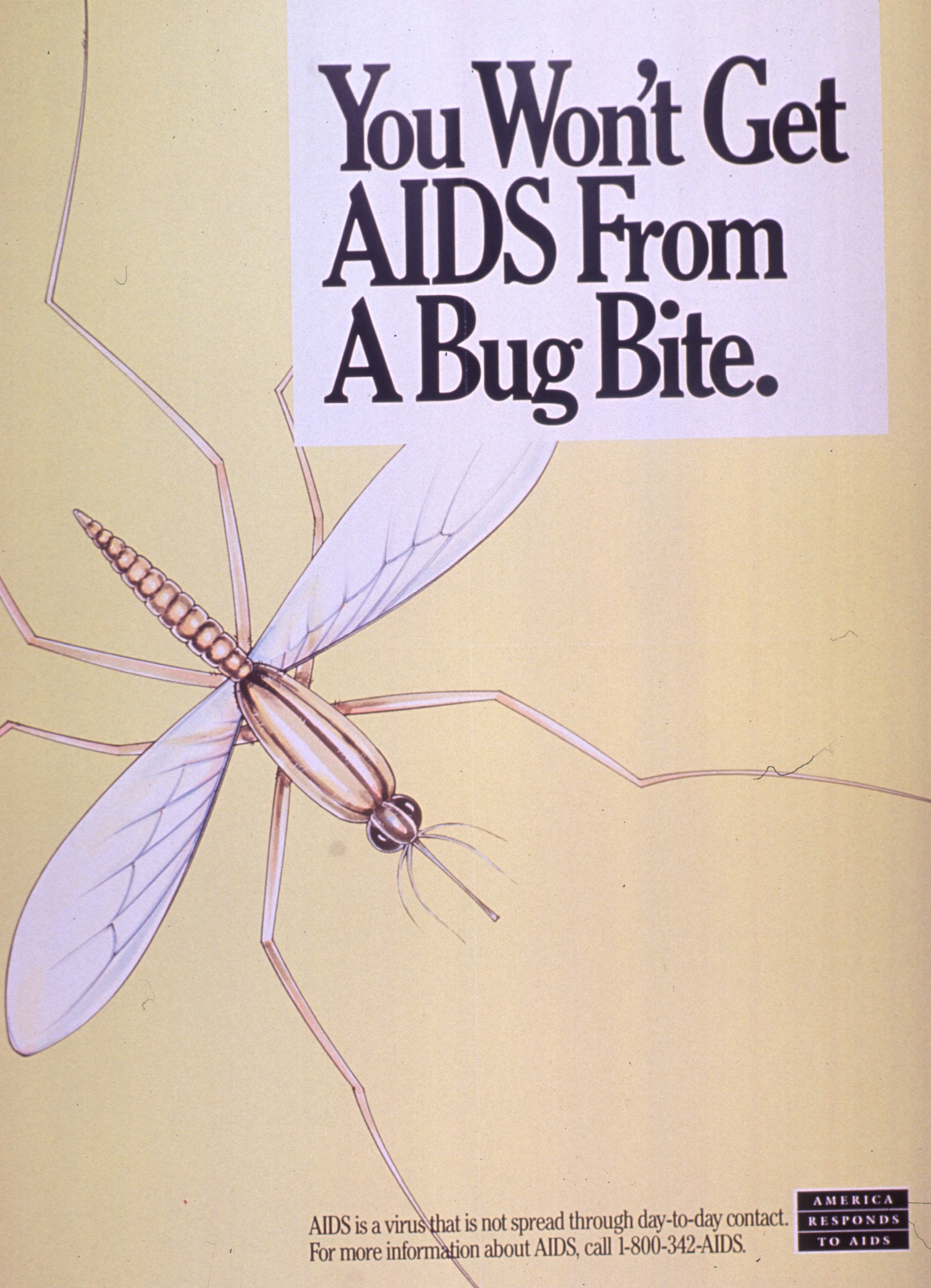 You won't get AIDS from a bug bite