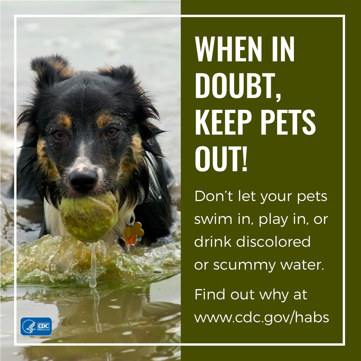 When in doubt, keep pets out!