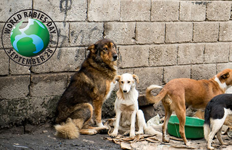 World Rabies Day : September 28 : share the message, save a life