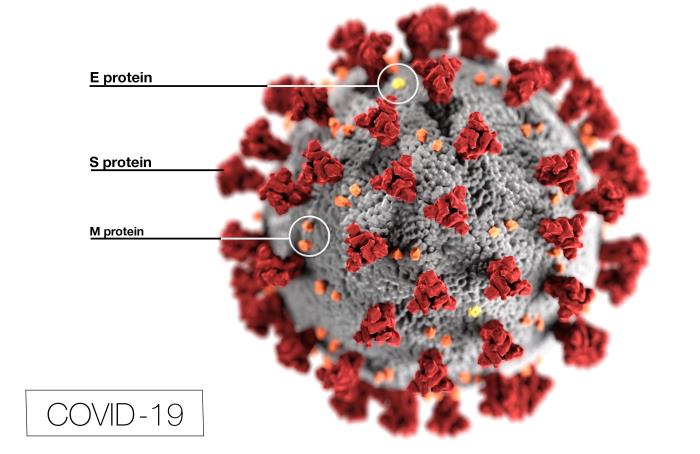 Severe Acute Respiratory Syndrome coronavirus 2 (SARS-CoV-2) COVID-19 illustration