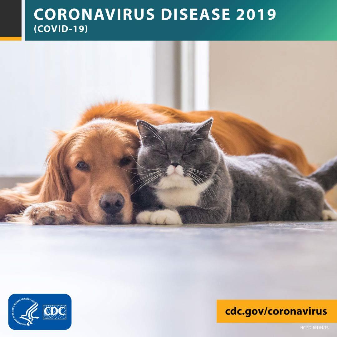 Pets & COVID-19 guidance